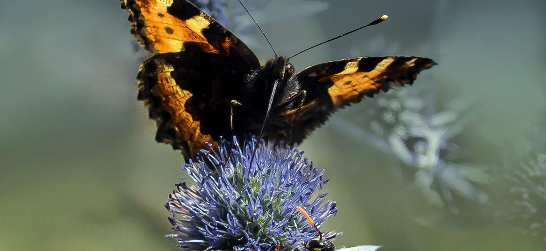 butterfly-4889815_1920-thegem-blog-default