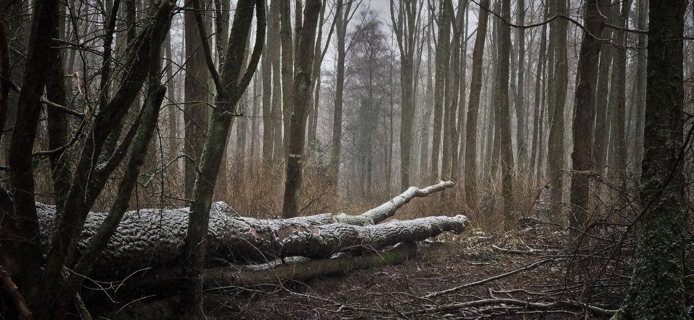 forest-3143157_1920-thegem-blog-default