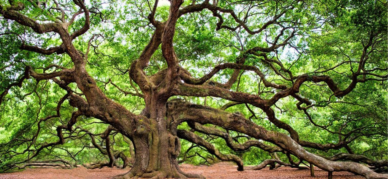 oak-tree-2018822_1920-thegem-blog-default