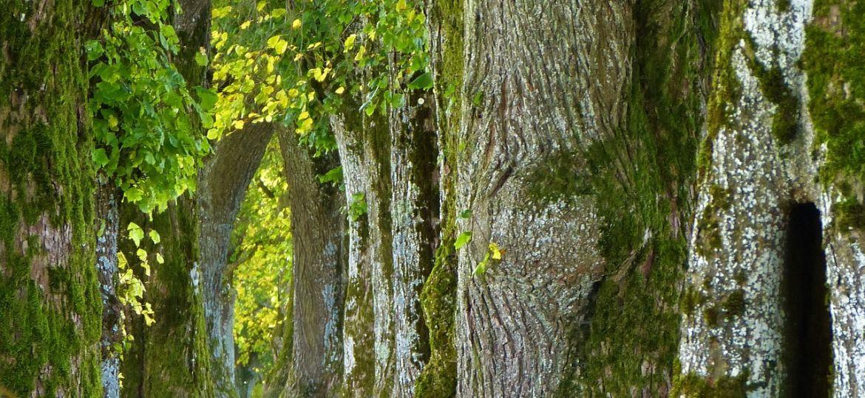 trees-2897757_1920-thegem-blog-default
