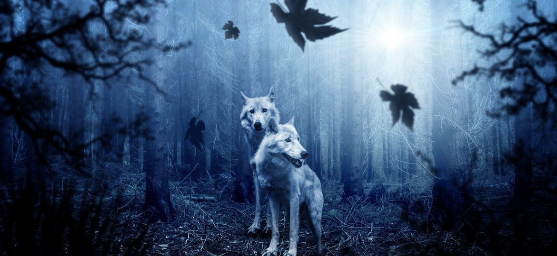 wolves-2864647_1920-thegem-blog-default