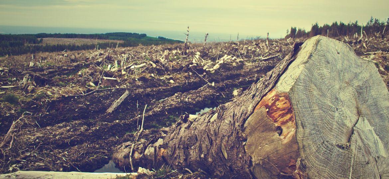 deforestation-405749_1920-thegem-blog-default