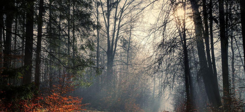 forest-5871899_1920-thegem-blog-default