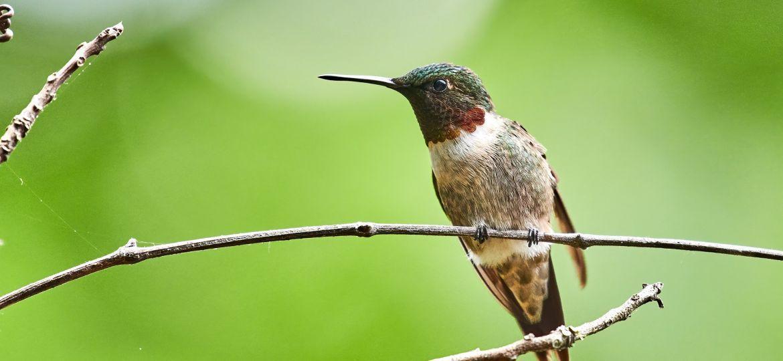 hummingbird-5592308_1920-thegem-blog-default