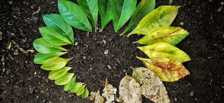 leaf-3341897_1920-thegem-blog-default