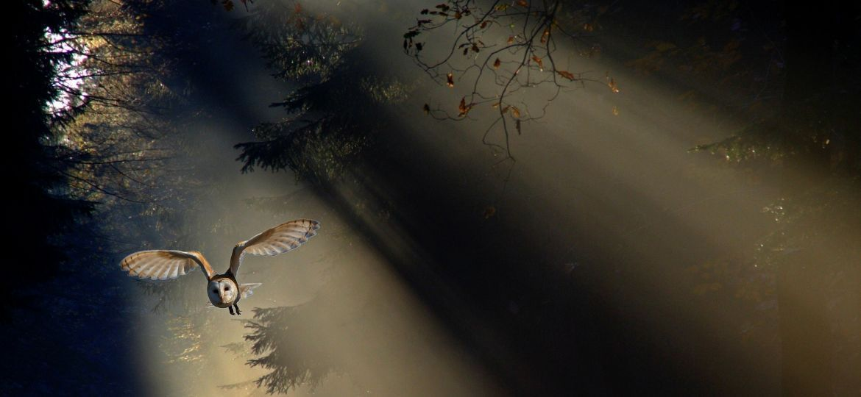 owl-1673568_1920-thegem-blog-default