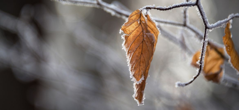 snow-2582719_1920-thegem-blog-default