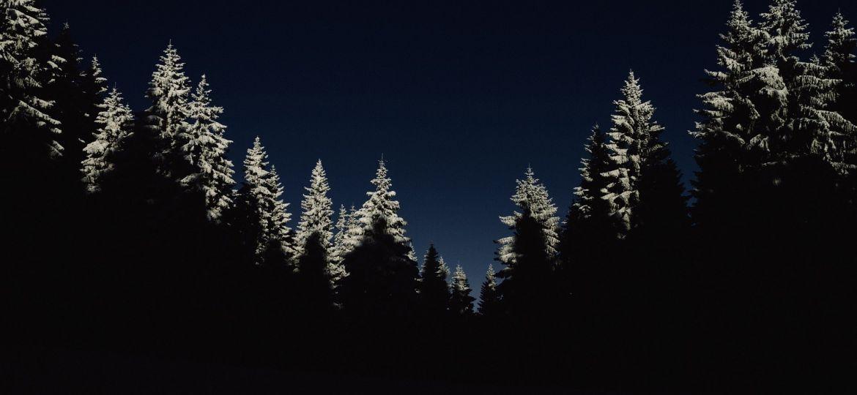 trees-1866597_1920-thegem-blog-default